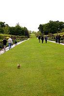 Рис.2 Обыкновенный садово-парковый газон
