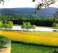 Рис.6 Луговой газон на открытом участке парка