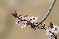 рис.16 уход за растениями весной