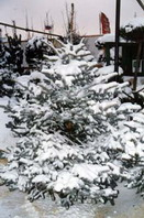 рис.20 уход за растениями зимой