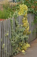 Рис.7 Забор из штакетника
