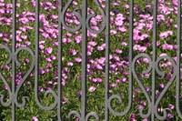 рис.9 Кованый забор