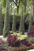 Колоновидные растения